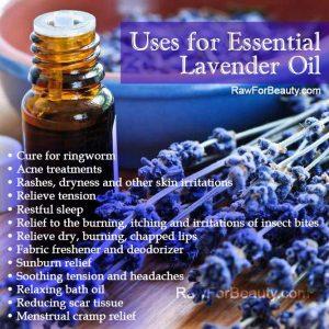 Lavender Oil Uses